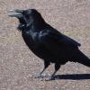 黒い服ばかりだから、確かに臆病者かも知れないね