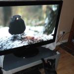 テレビを処分して1年… 生活は何か変わったのか? 今後のテレビのあり方は?
