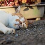 寝ても寝ても寝足りない! 睡眠の質を改善する3つの方法!